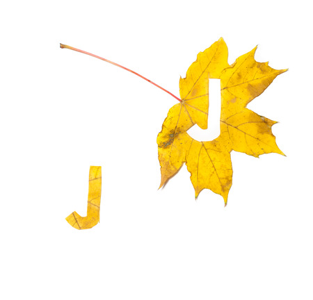 Autumn letters. The letter J is carved from a beautiful yellow maple leaf on a white background. On the sheet, the letter pattern of the letter