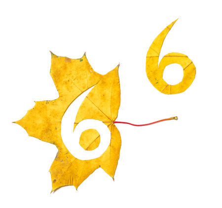 Autumn figures. Digit 6 is carved from a beautiful yellow maple leaf on a white background. On the sheet, the letter pattern of the letter