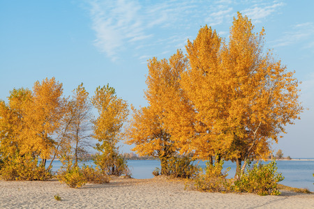 Autumn landscape. Beautiful trees with yellow leaves stand on the sandy bank of the river Stock Photo