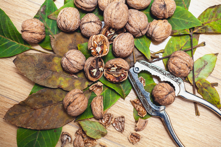 Group of ripe walnuts and green leaves of the tree lie on a brown background. In the foreground are peeled kernels. Beside steel tongs for chopping nuts 스톡 콘텐츠