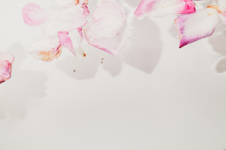 Floral abstract background. Beautiful petals of withered roses with a float in the water on a white background