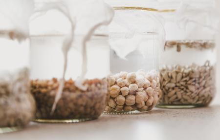 Kieming van zaden in water. Glazen potten met verschillende zaden worden gevuld met water. Banken zijn bedekt met wit gaas
