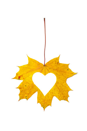 Autumn heart. The heart symbol is carved in stencils from a beautiful yellow maple leaf. Isolated over white background Reklamní fotografie