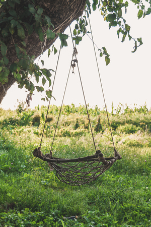 village plot. A swing on the tree. Homemade swing from a grid weigh on a tree against a background of green grass