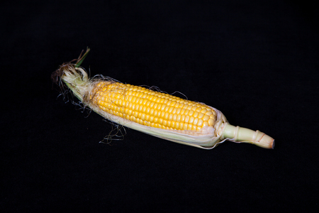 Appetizing cob of ripe yellow corn with green leaves lies on a black background