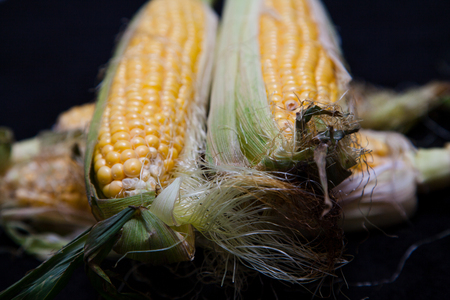 Appetizing cobs of ripe yellow corn with green leaves lie on a black background close-up Imagens