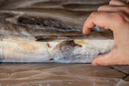 Hand shows the thickness of the layer of frozen fish