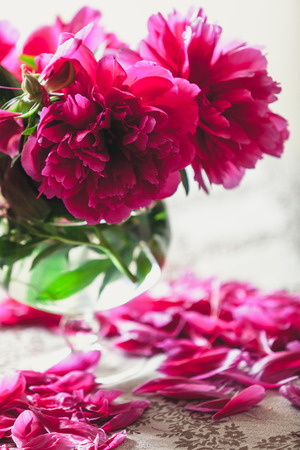 peonies on the table. Bright red flowers on short legs stand in a transparent vase. On the table lie fallen peon petals