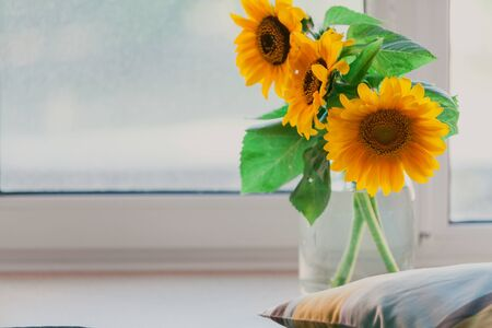 Still life with sunflowers. Three beautiful yellow sunflowers in a glass vase stand on a window sill next to a striped pillow Stock fotó