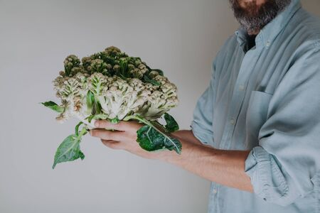 Hands holding cauliflower head close up