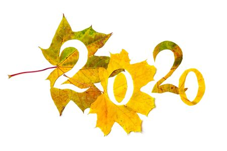 Autumn numbers. 2020 are laid out of beautiful yellow leaves of a maple in which figures are cut out. Isolated on white background