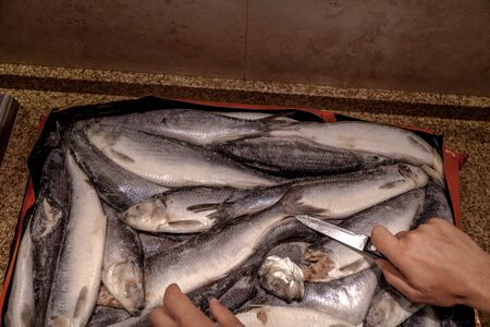 Sea catch. Frozen herring lies evenly. Nearby hand holds a sharp knife