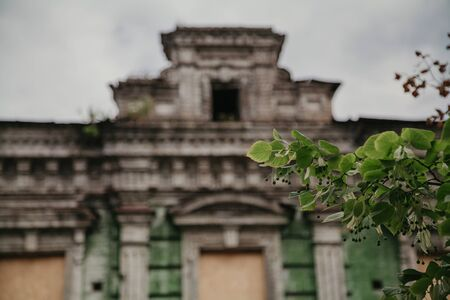 Living versus nonliving. Green leaves on a tree branch against the background of an old ruined building with a mezzanine