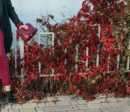 Autumn sketch in red tones. A girl in red pants with a bag is standing in front of a fence with twisted bushes with red leaves Imagens