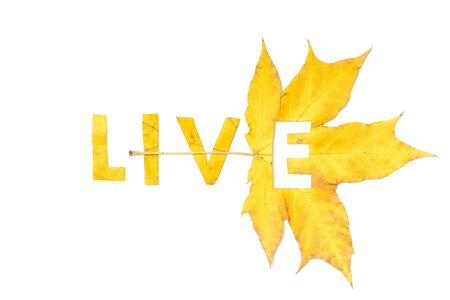 Live. Letter carved on a beautiful yellow maple leaf on a white background close-up