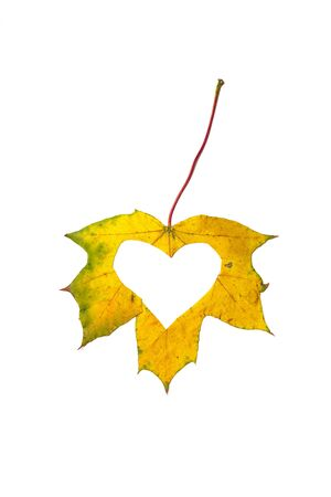 Autumn heart. The heart symbol is carved in stencils from a beautiful yellow maple leaf. Isolated over white background Stock fotó