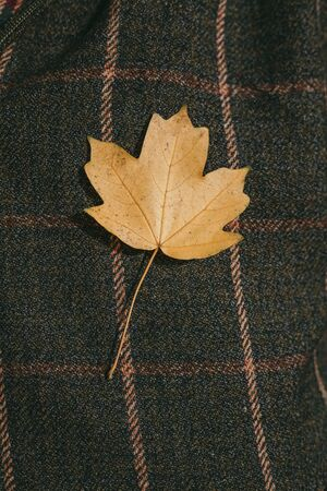 Symbol of Canada on the background of the symbol of Scotland. Bright yellow maple leaf on a background of tartan checkered fabric
