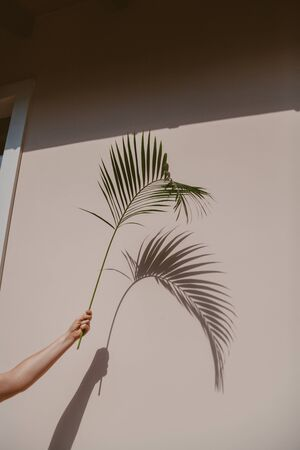 hand holds a graceful green branch of the Howea palm tree. She gives an original shadow on the wall.