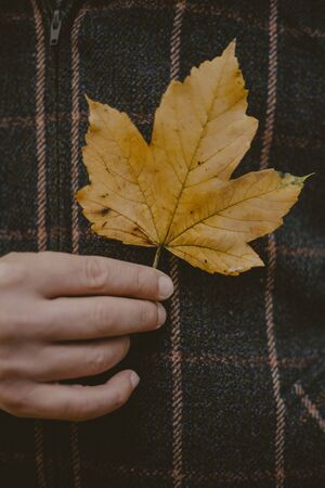 Symbol of Canada on the background of the symbol of Scotland. The hand holds a yellow maple leaf against the background of the tartans checkered fabric