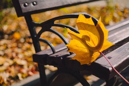Autumnal romance. A beautiful yellow maple leaf rests on the cast-iron arm of a wooden bench in the rays of the autumn sun  Imagens