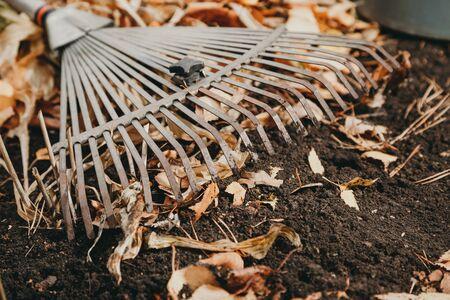 Steel fan rakes lie on autumn chernozem closeup. Around lie fallen birch leaves. Front view Zdjęcie Seryjne