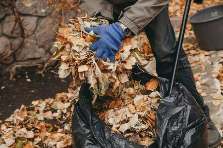 Autumn work in the garden. Hands in blue gloves put the fallen leaves in a large plastic bag.