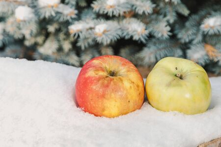 Apples on the snow. Fruit still life in winter. Two beautiful apples lie on a white snow cover on a blue spruce background Reklamní fotografie