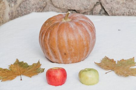 Autumn still life on snow. A round ripe pumpkin and two leaves of maple lie on a white snow cover. Near the red and green apple