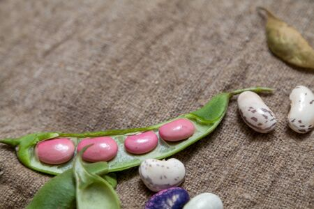 Pods and seeds of beans of different colors lie on burlap. View from above