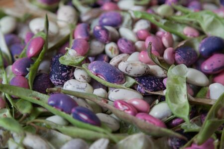 Pods and seeds of beans of different colors lie evenly. View from above