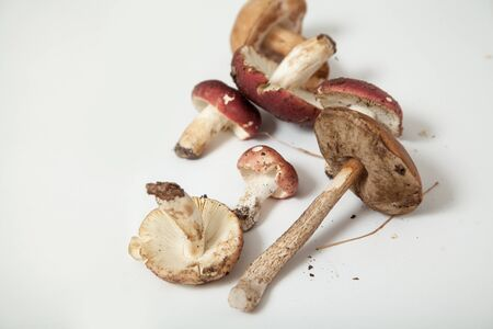 Edible boletus mushroom with a thin leg lies on a white background. Nearby lies a group of russula with red hats