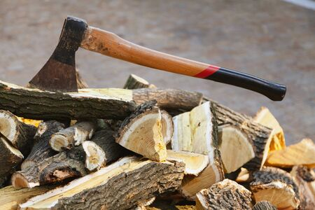 ax on a long handle sticks out in a mulberry wood log. A log lies on a pile of chopped firewood in the yard