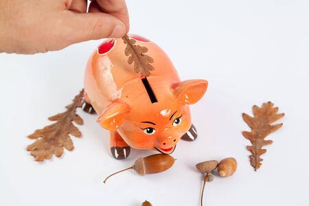 hand is putting a coin into a piggy bank in the shape of a pig of the symbol of 2019 on a white background close-up. Next are acorns and leaves