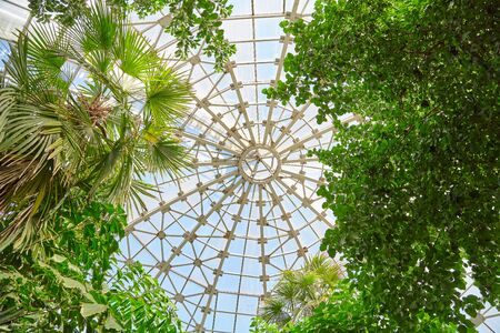 Glass roof of the greenhouse in the building of the Botanical Garden. The transparent dome of the greenhouse of the botanical garden. Inside view from below.