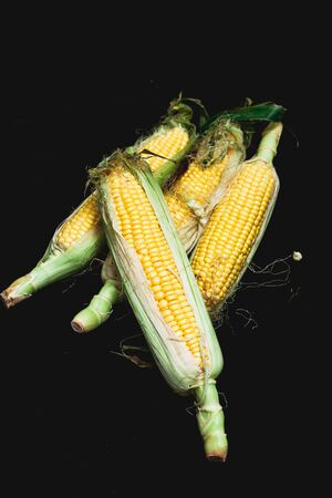 Appetizing cobs of ripe yellow corn with green leaves lie on a black background close-up Stock Photo