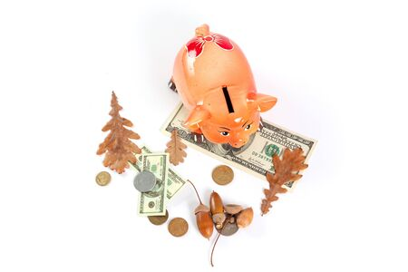 Piggy bank in the shape of a pig. 2019 dollar bill symbol on a white background. Nearby are acorns, coins, and a dry oak leaf. 写真素材