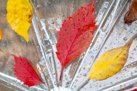 Fallen leaves of trees of different shapes and colors stuck to an umbrella made of transparent material close-up