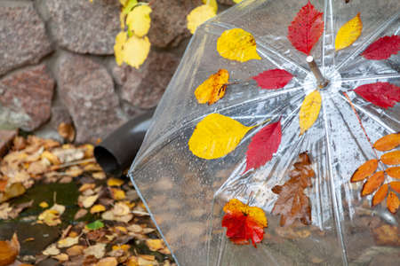 wet open transparent umbrella made of transparent plastic stands in front of a stone fence. fallen leaves of different trees stuck on it