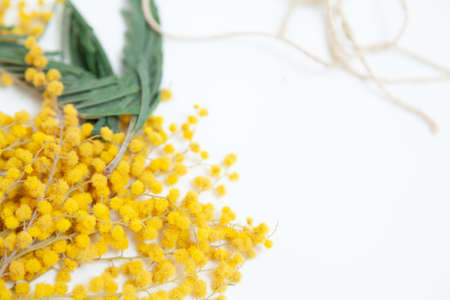Spring still life. A branch of a yellow mimosa lies on a white background. Nearby is a rope
