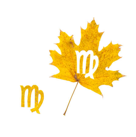 Autumn zodiac sign. Virgo zodiac sign symbol cut from yellow maple leaf on white background