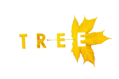 Tree. Letter carved on a beautiful yellow maple leaf on a white background close-up Reklamní fotografie - 156782577