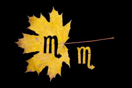 Autumn zodiac sign. Scorpio zodiac sign symbol cut from yellow maple leaf on black background