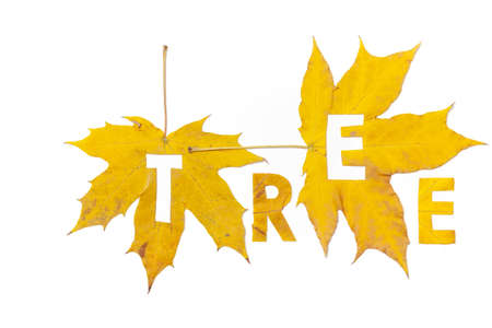 Tree. Letter carved on a beautiful yellow maple leaf on a white background close-up Reklamní fotografie - 156782602