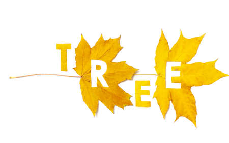 Tree. Letter carved on a beautiful yellow maple leaf on a white background close-up