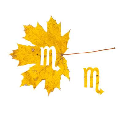 Autumn zodiac sign. Scorpio zodiac sign symbol cut from yellow maple leaf on white background