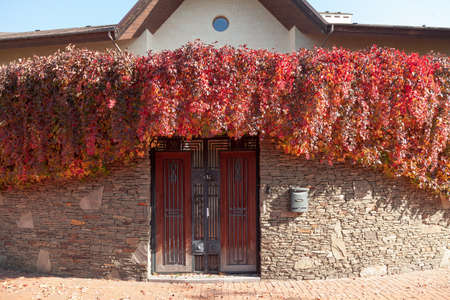 red arch of Vici grapes over a gate in a stone fence. In front of the fence there is a red paving slab. In the background is a modern house