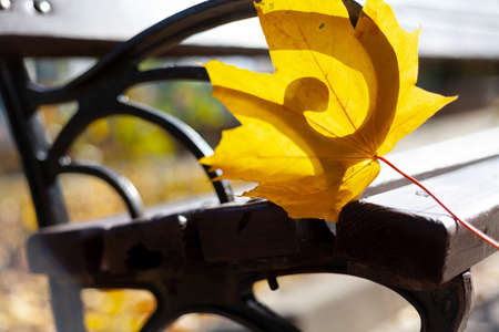 Autumnal romance. A beautiful yellow maple leaf rests on the cast-iron arm of a wooden bench in the rays of the autumn sun