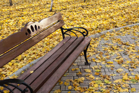 wooden bench with an openwork armrest stands in an autumn park among yellow fallen leaves