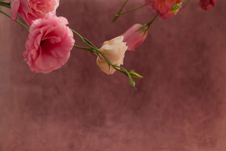 Horizontal postcard invitation blank with place for text. Pink and cream eustoma flowers on fade pink background