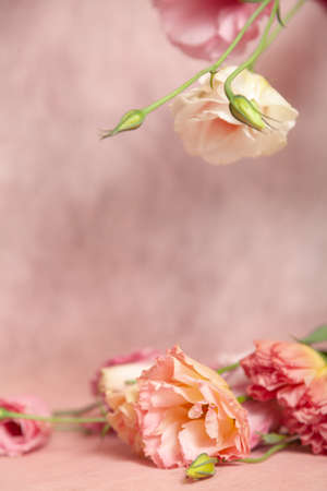 Vertical postcard invitation blank with place for text. Pink and cream eustoma flowers on a delicate pink pastel background 写真素材